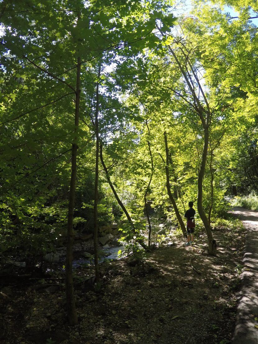 Gazing at Yellow Creek