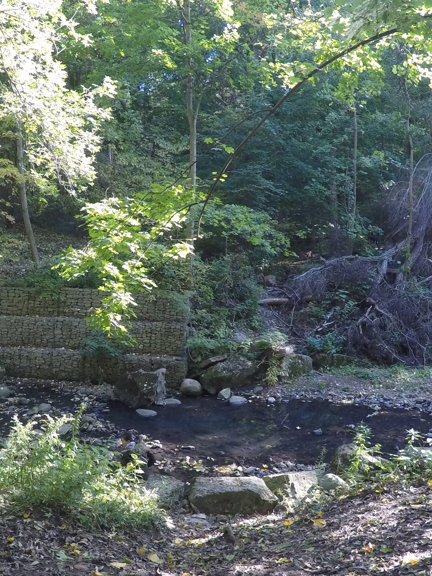 Forest bathing invitation of conversation with a creek at Yellow Creek Ravine in Toronto