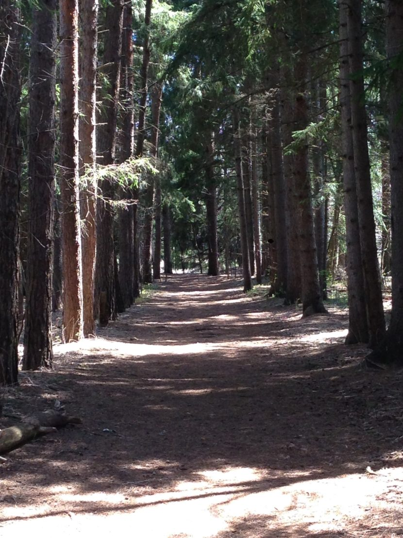 Forest trail in Rouge Park